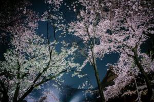 靖国神社の夜桜