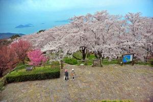 大浜公園の桜