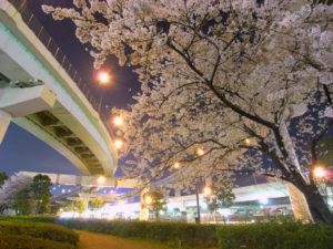 辰巳の森海浜公園の夜桜