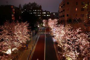 六本木のさくら坂の夜桜