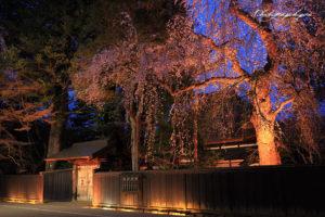 武家屋敷と枝垂れ桜