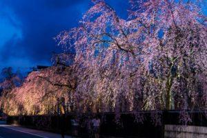 角舘の夜桜ライトアップ
